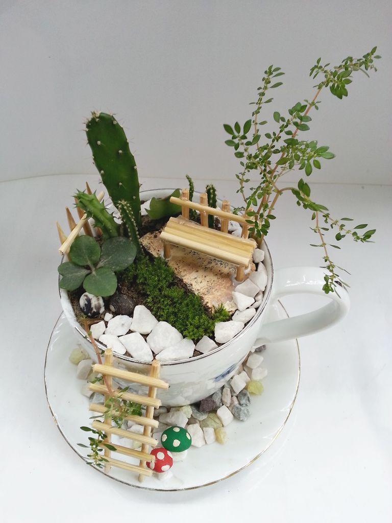 Сад в чашечке