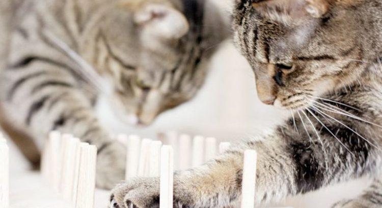 Игра для котиков