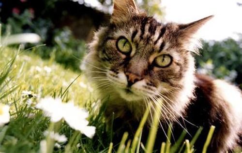 Наждачка для кота