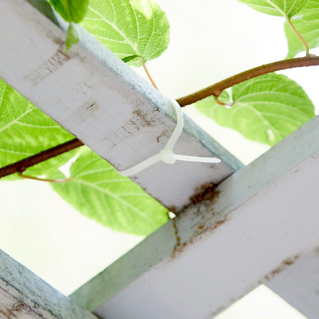 Подвязка растений
