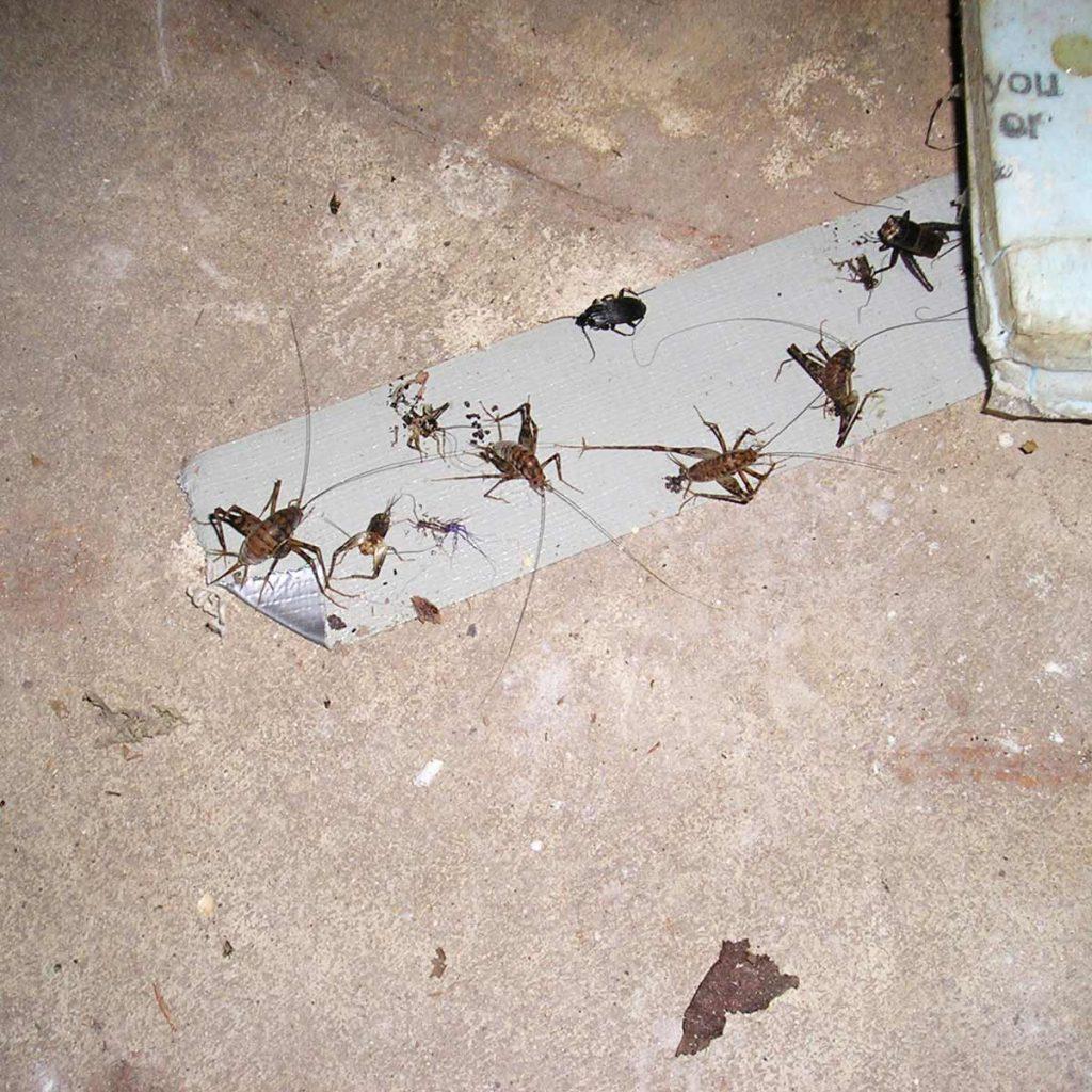 Скотч от насекомых