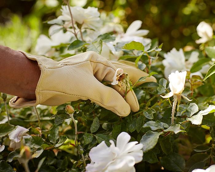 Обрезка сухих цветов