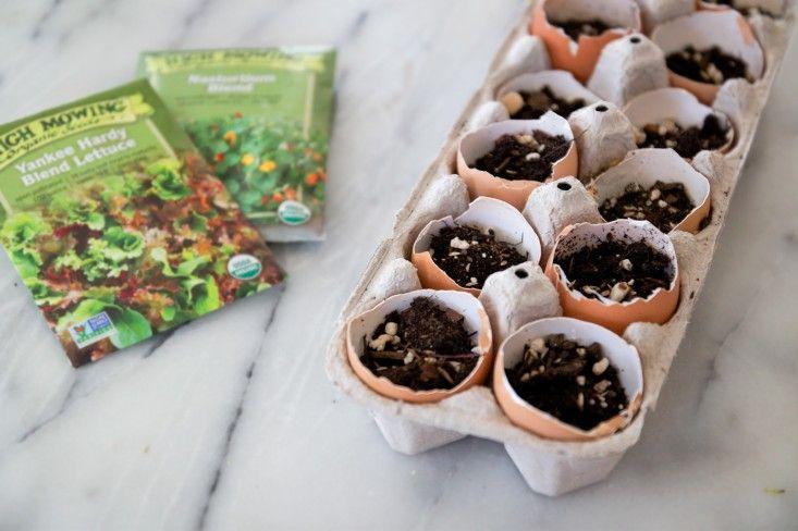 Сосуды для семян
