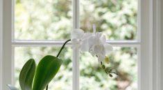 Советы по пересадке орхидей