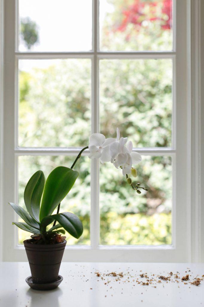 Советы по пересадке орхидеи