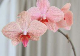 10 вещей об орхидеях