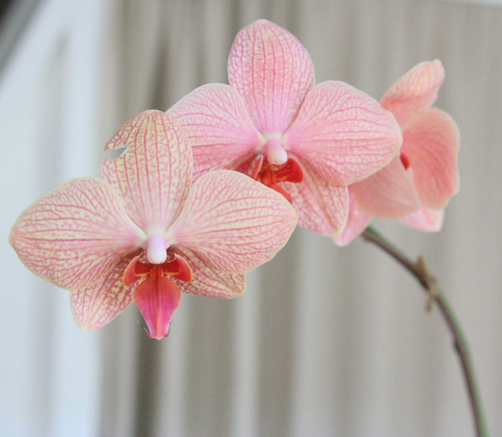 10 секретов ухода за орхидеями