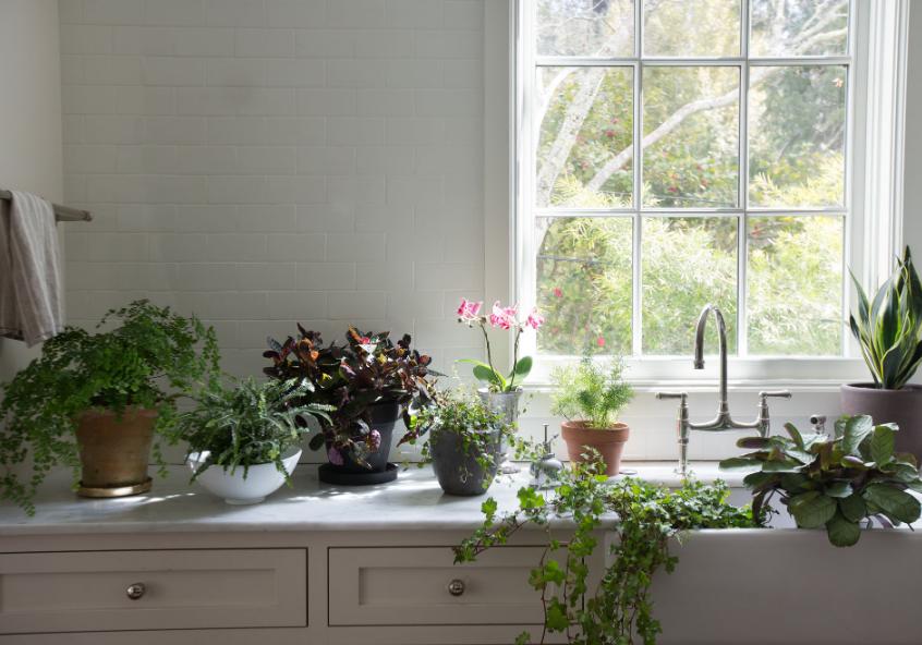 Комнатные растения, растущие при слабом освещении