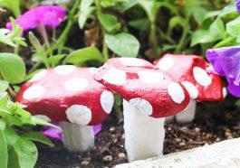 Декоративные грибы