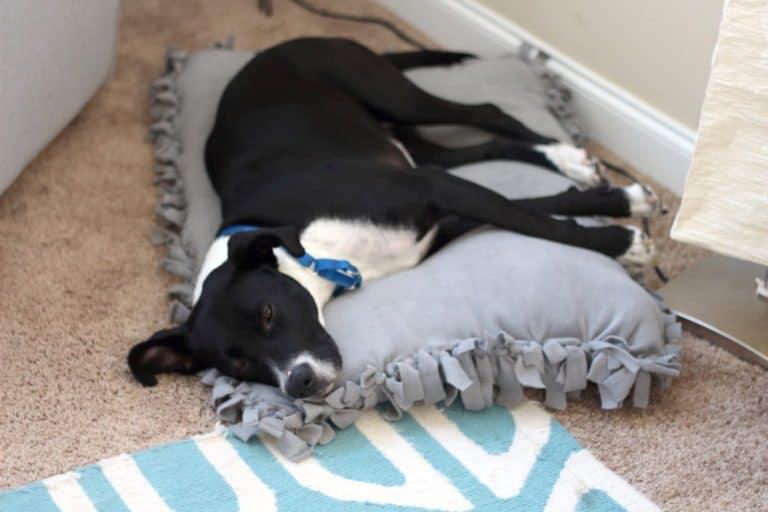Подушка для домашнего питомци без нитки с иголкой
