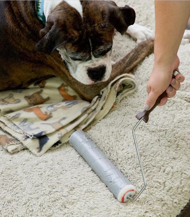 Как избавиться от шерсти животных