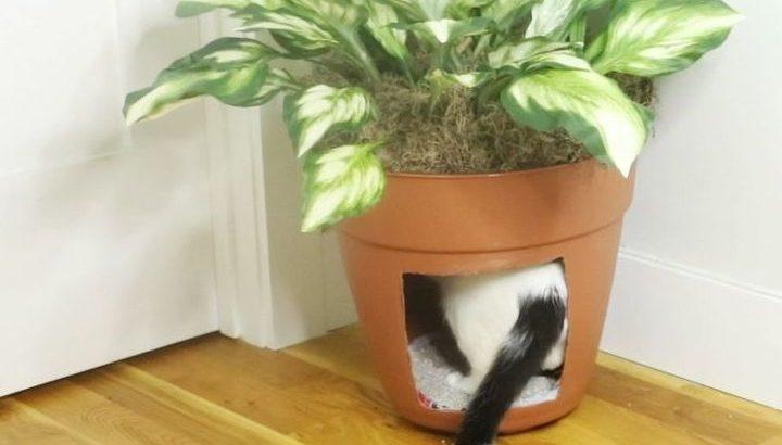 Как замаскировать лоток кота