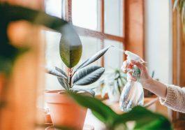 Растения в доме